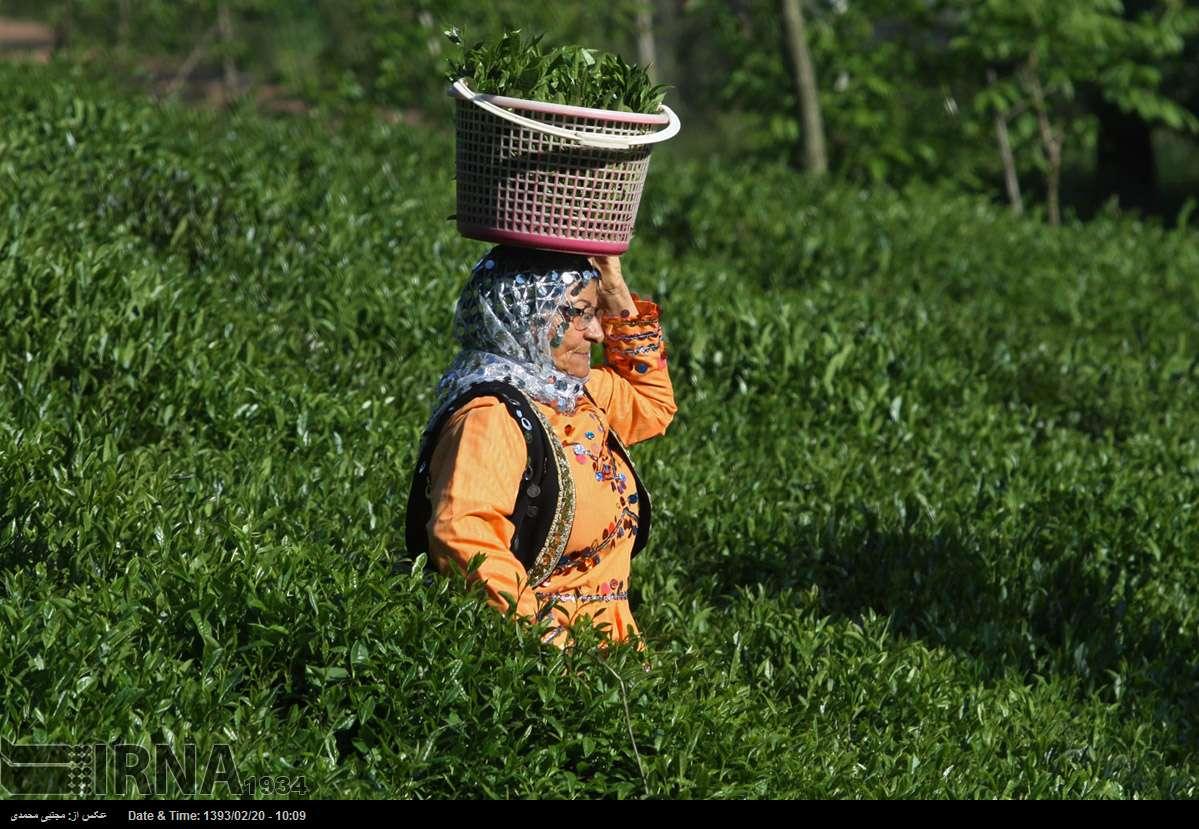 صادرات ۱۰۰میلیوندلاری محصولات کشاورزی