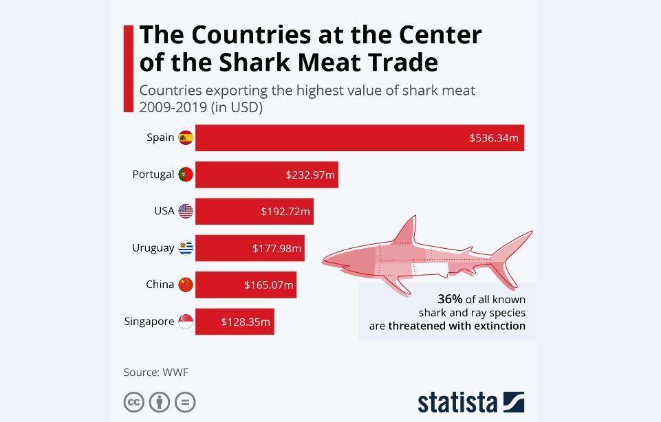 صید بیرویه برای تجارت گوشت؛ عامل انقراض نسل کوسهها